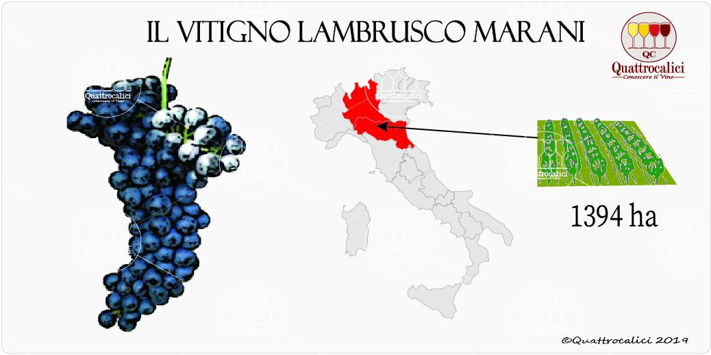 vitigno lambrusco marani