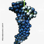 lambrusco marani vitigno