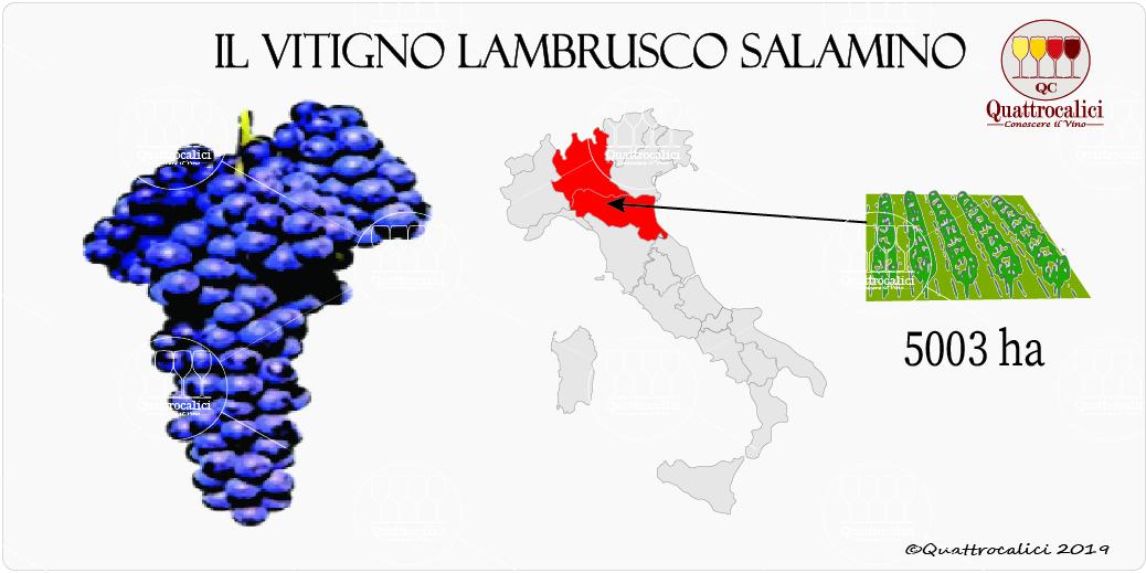 vitigno lambrusco salamino