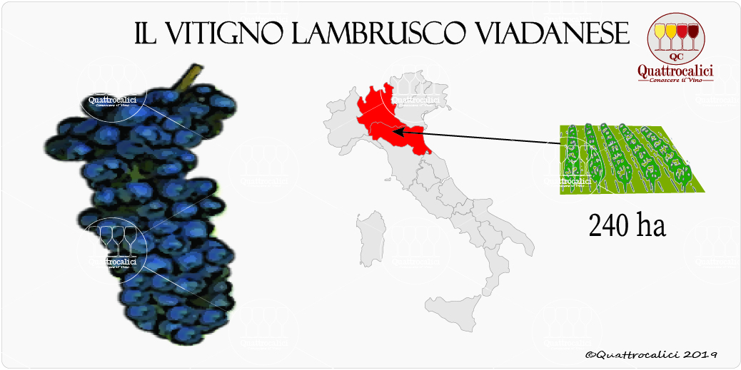vitigno lambrusco viadanese