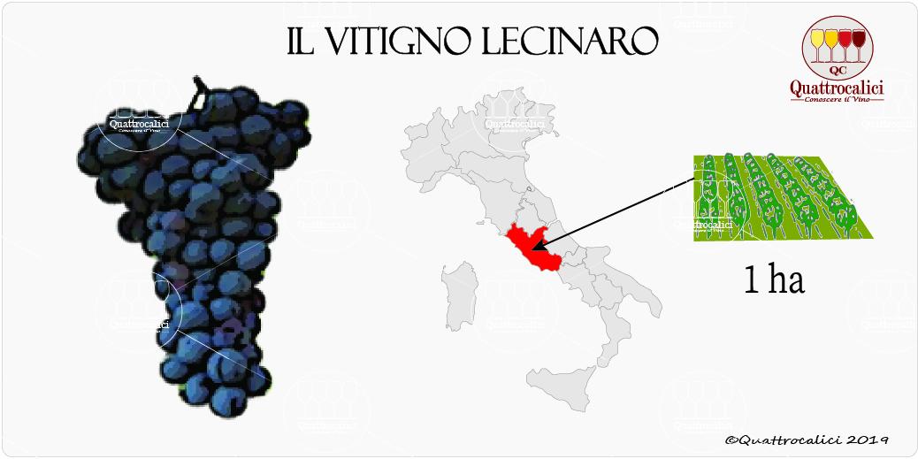 vitigno lecinaro