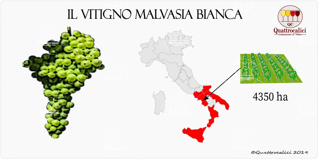 vitigno malvasia bianca