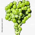 malvasia bianca di basilicata vitigno