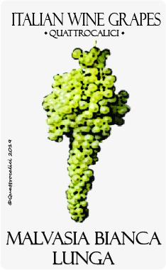 malvasia bianca lunga vitigno