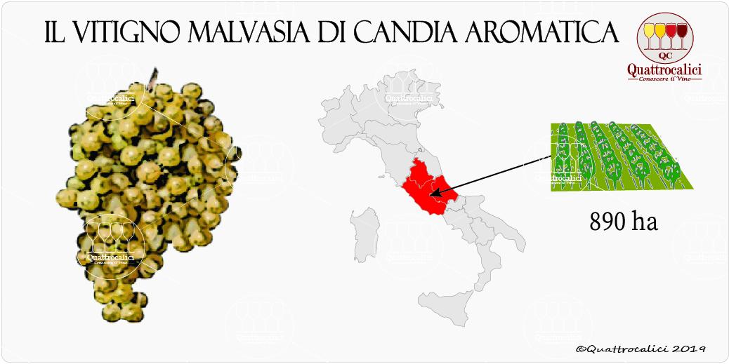 vitigno malvasia di candia aromatica