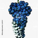 malvasia di casorzo vitigno
