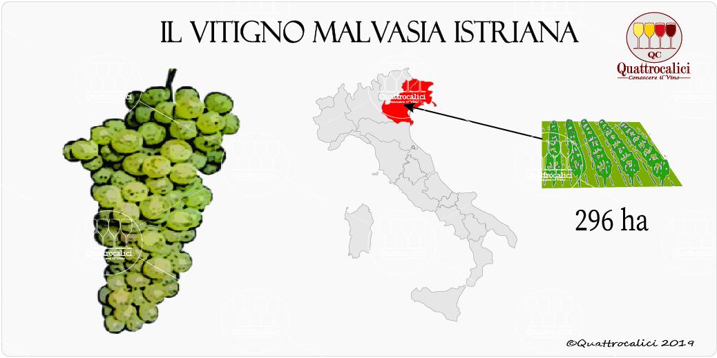 vitigno malvasia istriana