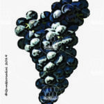 malvasia nera di brindisi vitigno
