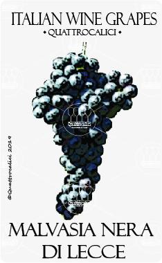 malvasia nera di lecce vitigno