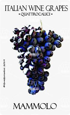 mammolo vitigno
