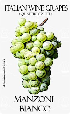 manzoni bianco vitigno