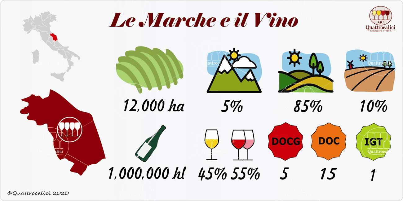 il vino e i vini nelle marche