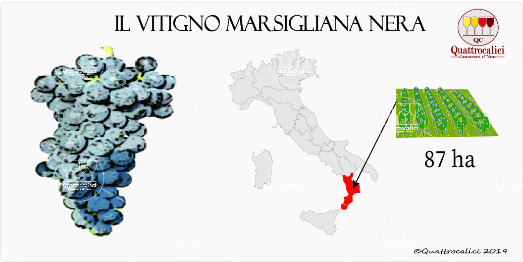 vitigno marsigliana nera