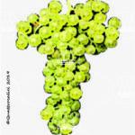 marzemina bianca vitigno
