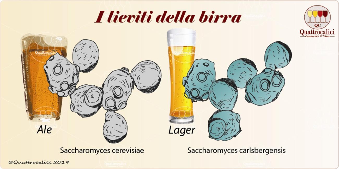 il lievito per la birra