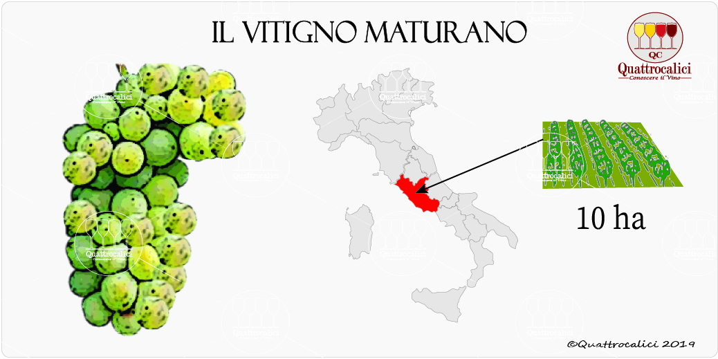 vitigno maturano