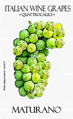 maturano vitigno