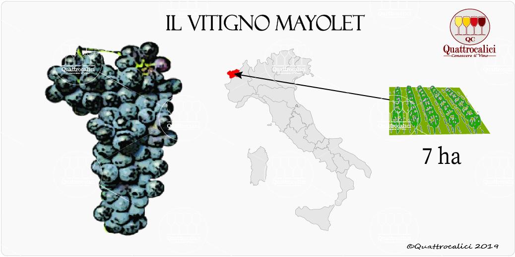 vitigno mayolet