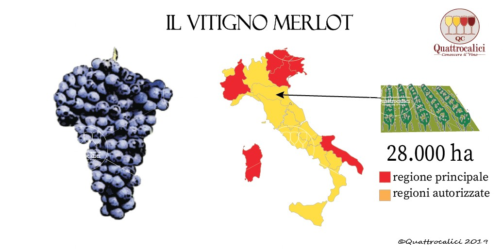vitigno merlot