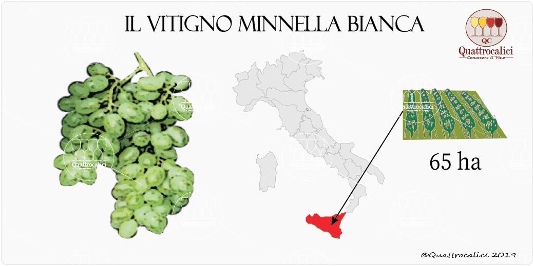 vitigno minnella bianca
