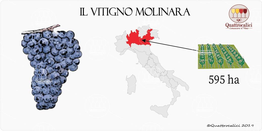 vitigno molinara