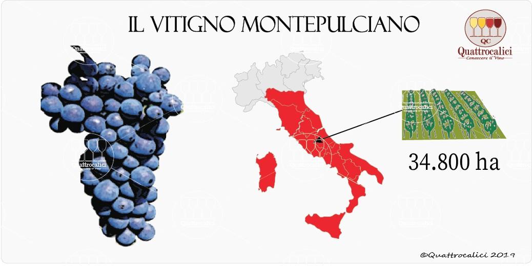vitigno montepulciano