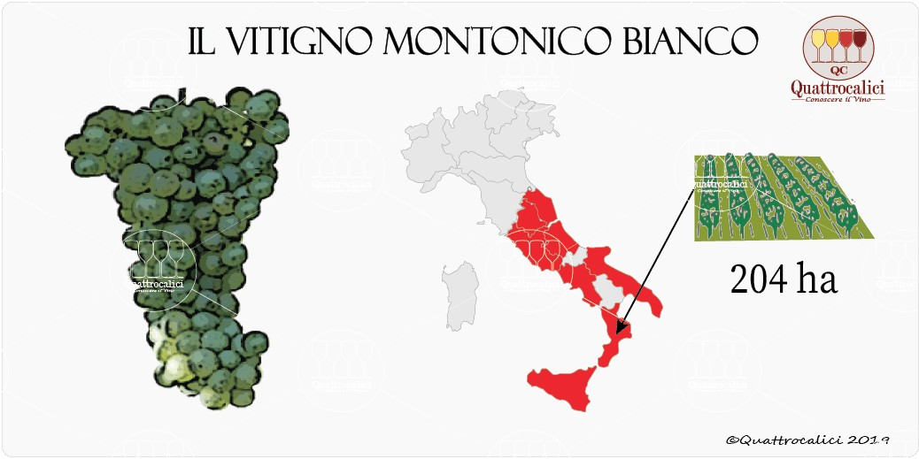 vitigno montonico bianco