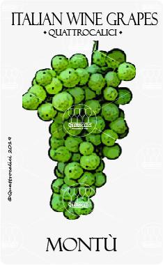 montu vitigno