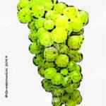 moscato bianco vitigno