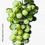 nasco vitigno