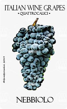 nebbiolo vitigno