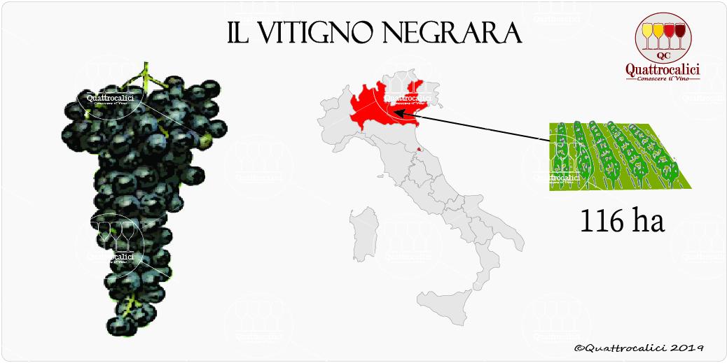 vitigno negrara