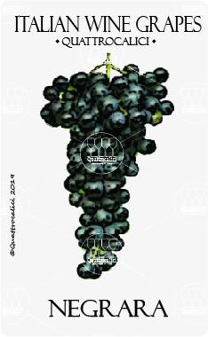 negrara vitigno