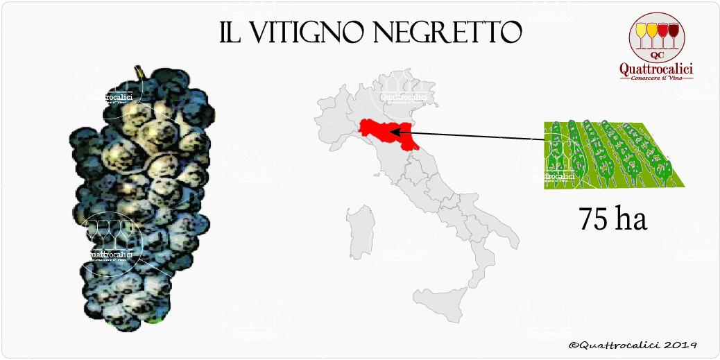 vitigno negretto