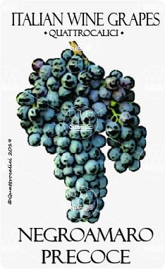 negroamaro precoce vitigno