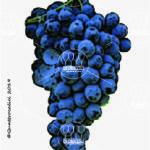 nocera vitigno