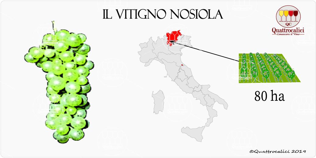 vitigno nosiola