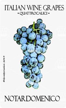 notardomenico vitigno