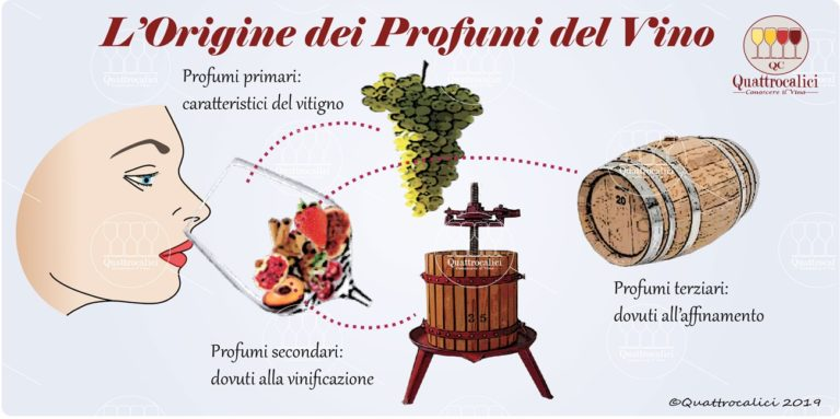 Origine dei profumi del vino