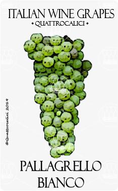 pallagrello bianco vitigno