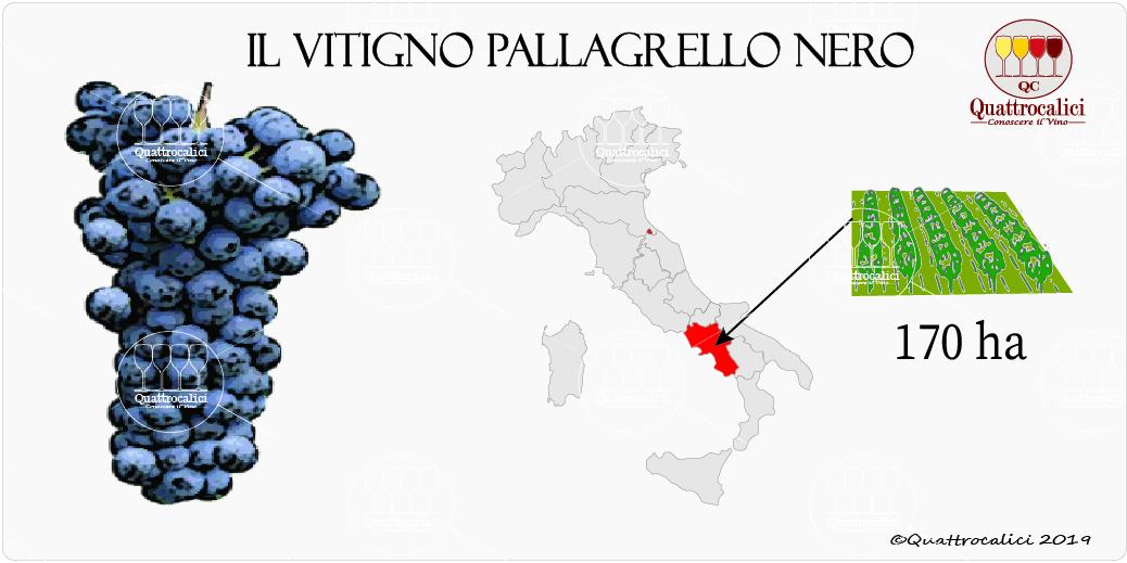 vitigno pallagrello nero