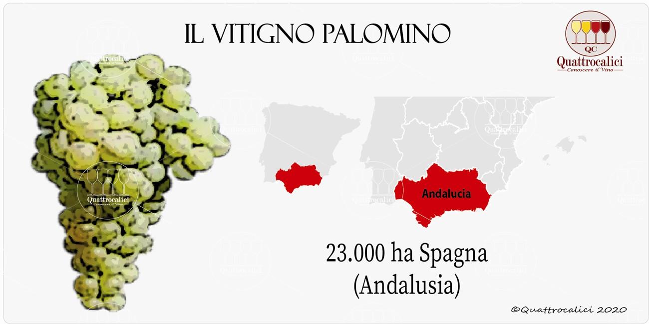 palomino vitigno