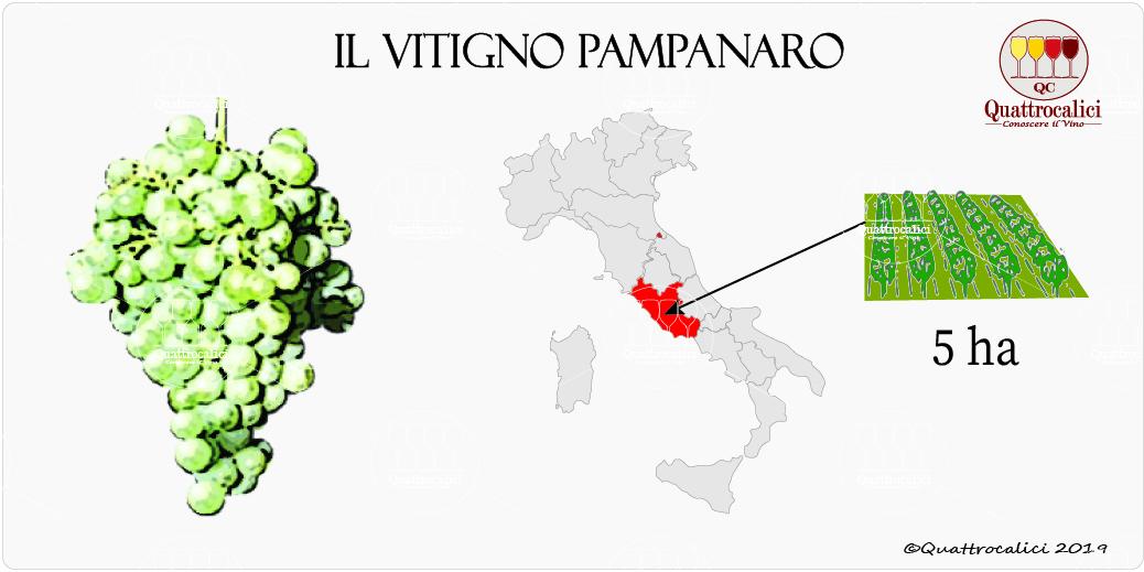 vitigno pampanaro