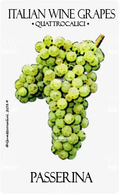 passerina vitigno