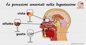 le percezioni sensoriali nella degustazione del vino