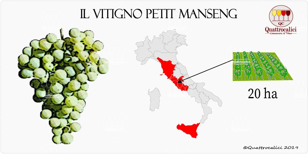 vitigno petit manseng