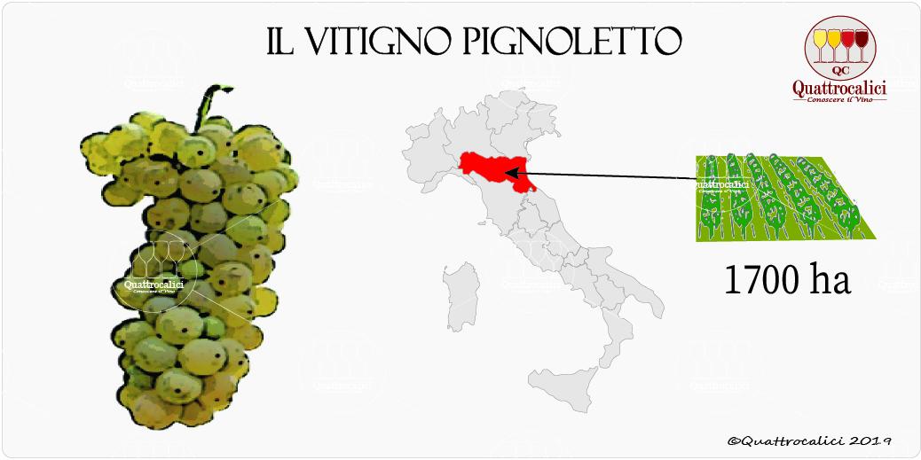 vitigno pignoletto