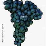 pignolo vitigno