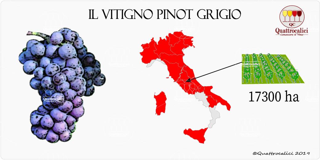 vitigno pinot grigio