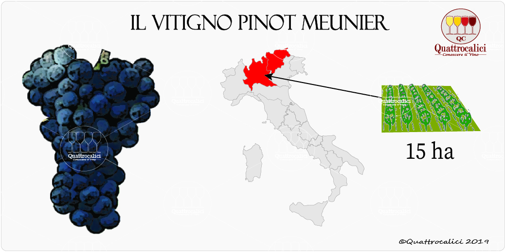 vitigno pinot meunier